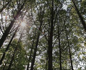 [서울둘레길 문화읽기 ⑥]서울둘레길 4코스 <1> 대모·구룡산 구간(수서역~양재시민의 숲)